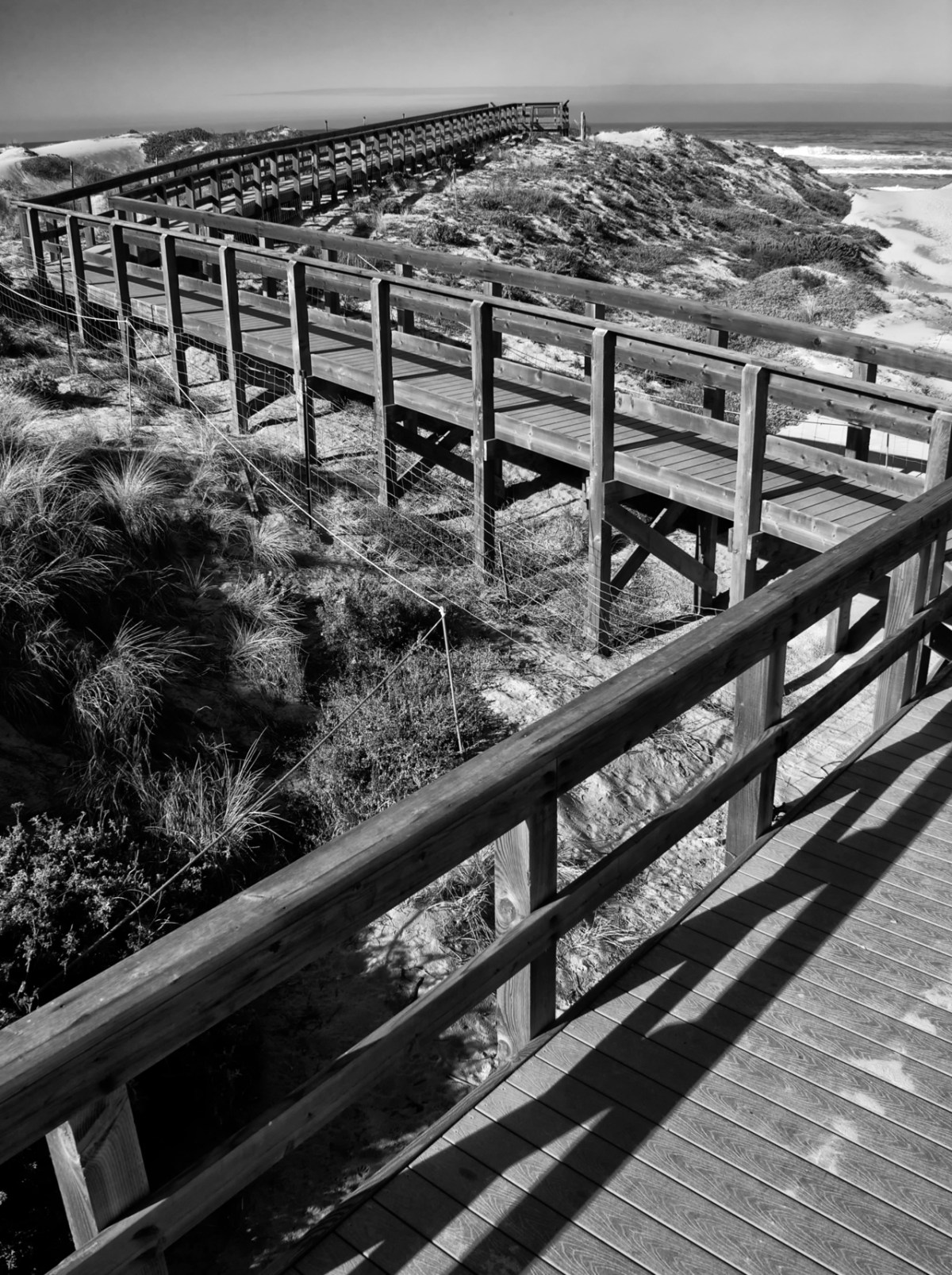 Pathway to the Sea - Oso Flaco State Beach, CA