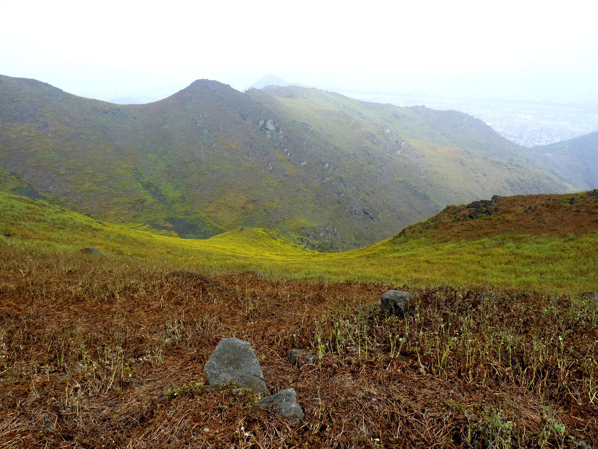Lomas de Mangomarca, San Juan de Lurigancho, Lima-Perú (2011)