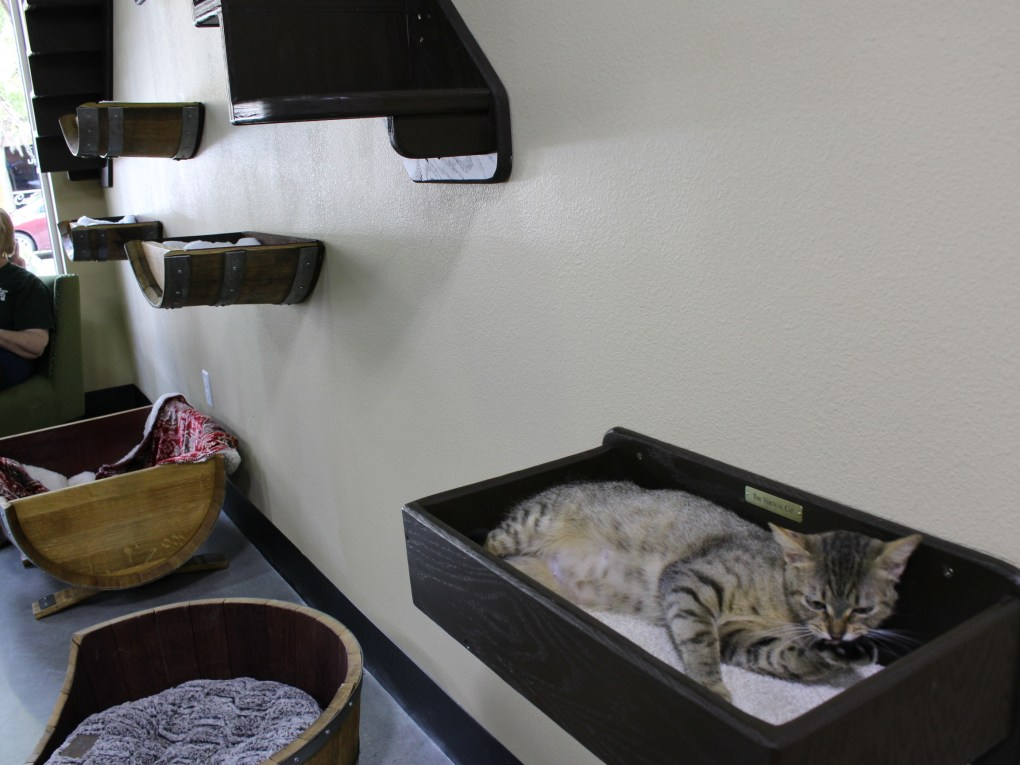 Various perches, toys and beds are placed throughout the play area at Orlando Cat Cafe.