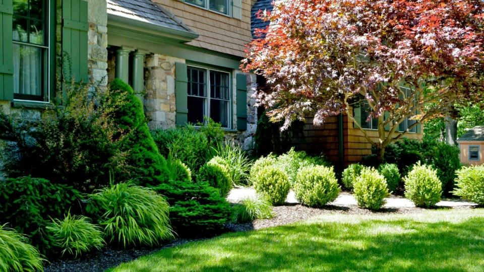 Unique Ideas for Foundation Plantings