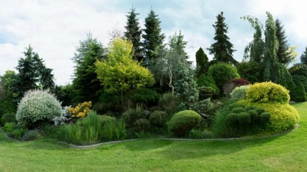 evergreen tree landscape ideas