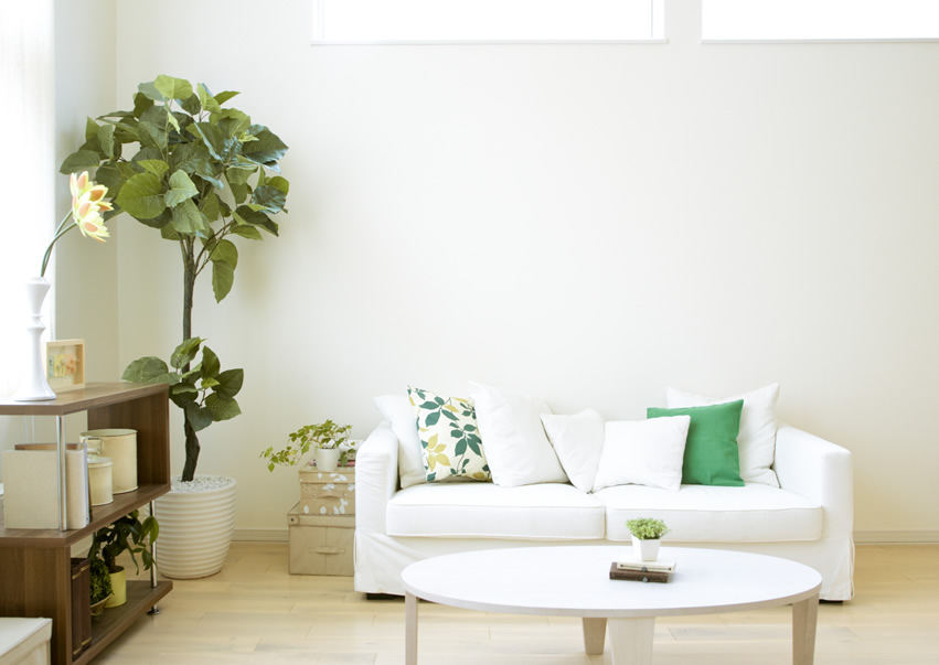 clean living room modern wall colors orchid cleaning services cayman with white couch jpg