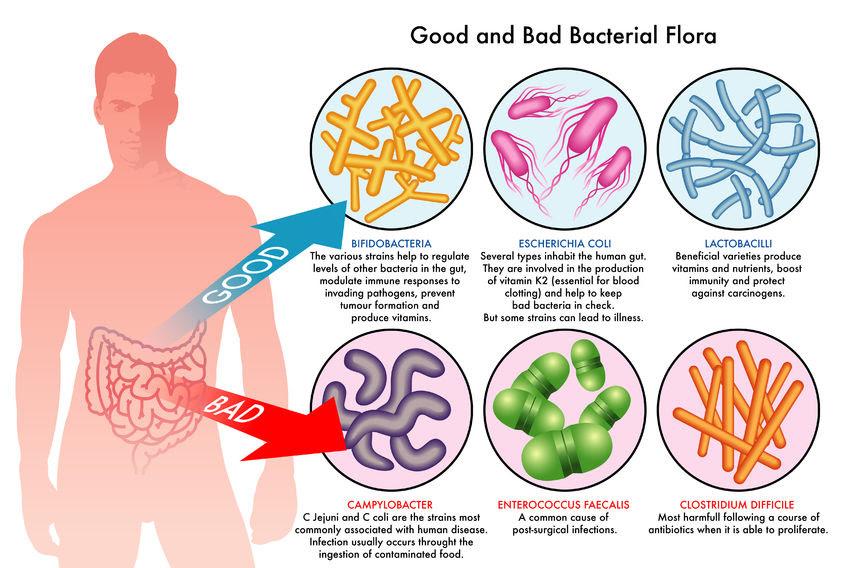 l'importanza della supplementazione probiotica post lavaggio