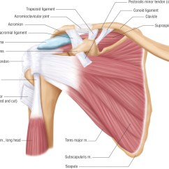Arm Bones And Muscles Diagram Vw Golf Mk4 Tow Bar Wiring I Have A Rotator Cuff Injury... Now What? — Burien Spine & Sport Rehab