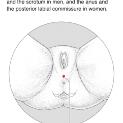 Pressure Points Diagram Massage 2005 Ford Escape Exhaust Acupressure For Good Sex Cicuto Acupuncture From A Manual Of By Deadman Al Khafaji Amp