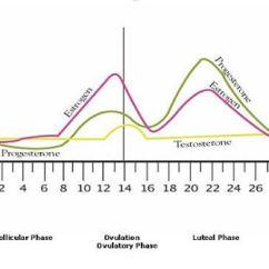 Hormonal Acne Diagram Best Subwoofer Wiring Diagrams Hormones And Village Dermatology