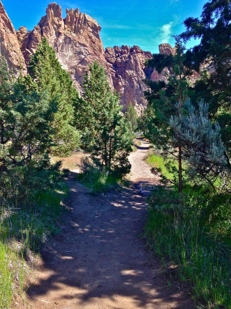 Shade trees are plentiful along the Wolf Tree Trail for those hot summer days at Smith Rock State Park.