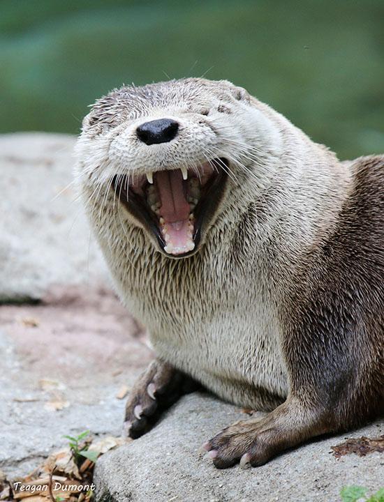 Puns - otter - Funny Puns - Pun Pictures - Cheezburger