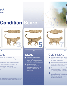 Body condition score chart catsg also pet weight check  association for obesity prevention rh petobesityprevention