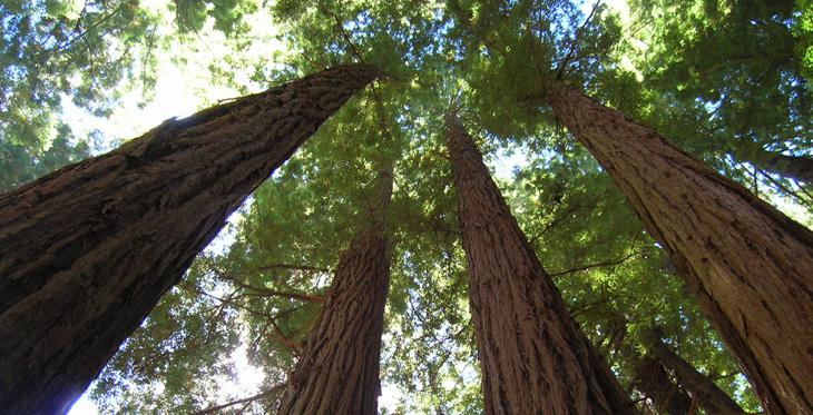 trees-02.jpg