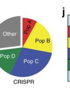 This is definitely one of the simpler versions  pie chart with just categories however it seems even authors didn   have much confidence in also charts data spotlight rh gabrielaplucinska