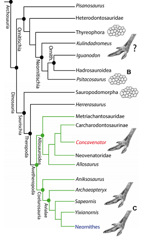 Distribution of an avian-style podotheca in dinosaurs. (Cuesta et al. 2015)