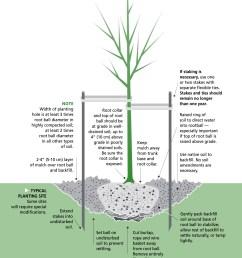 planting tree illustration copy 2 jpg [ 1000 x 1260 Pixel ]