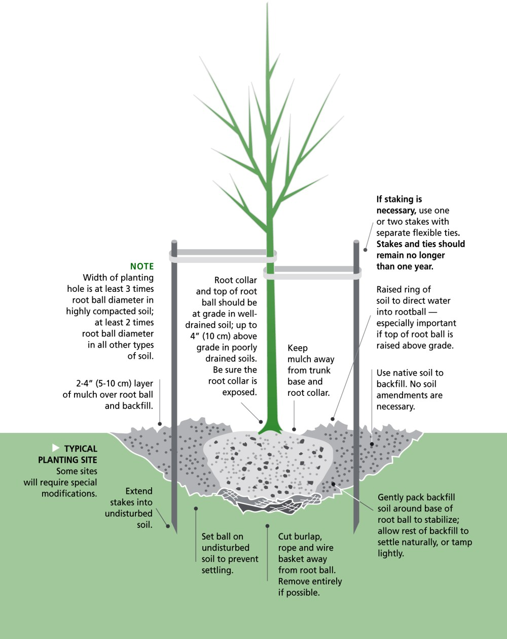 medium resolution of planting tree illustration copy 2 jpg