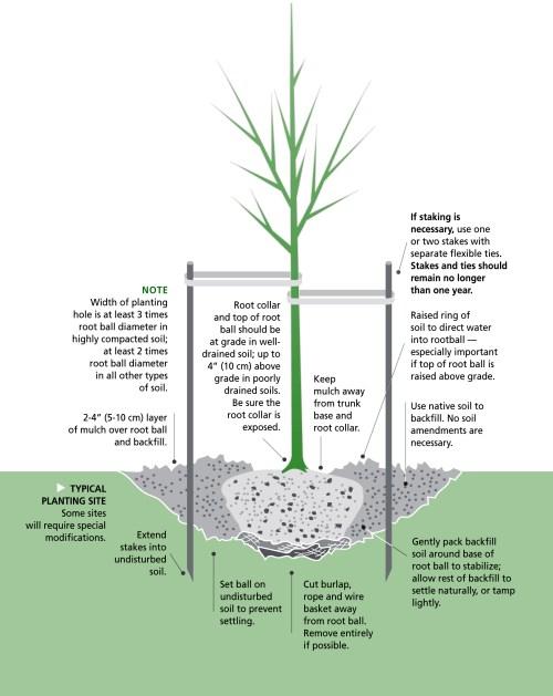small resolution of planting tree illustration copy 2 jpg