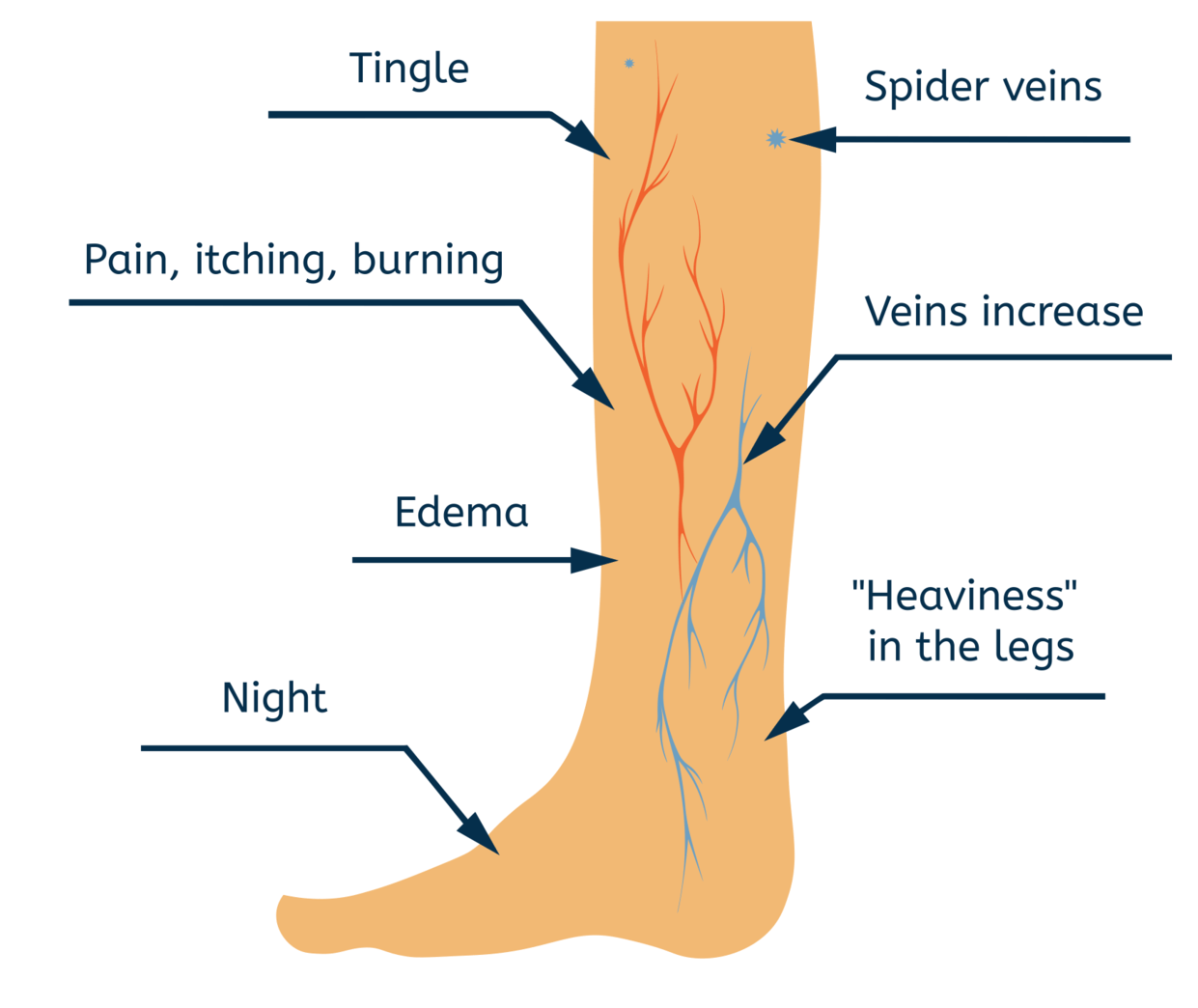 medium resolution of poor circulation in the legs can cause varicose veins blood moves through a healthy vein