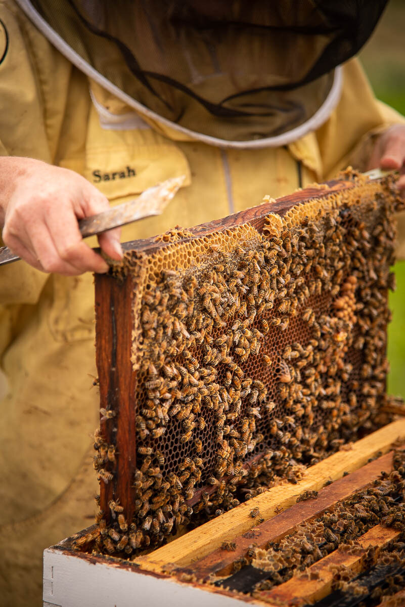Kids \u0026 Bees — The Bee Girl Organization [ 1200 x 801 Pixel ]