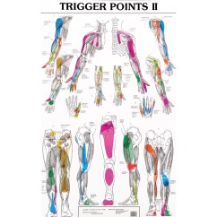 Pressure Points Diagram Massage Use Case Library Management Therapy Treatment For Trigger Chart Jpg