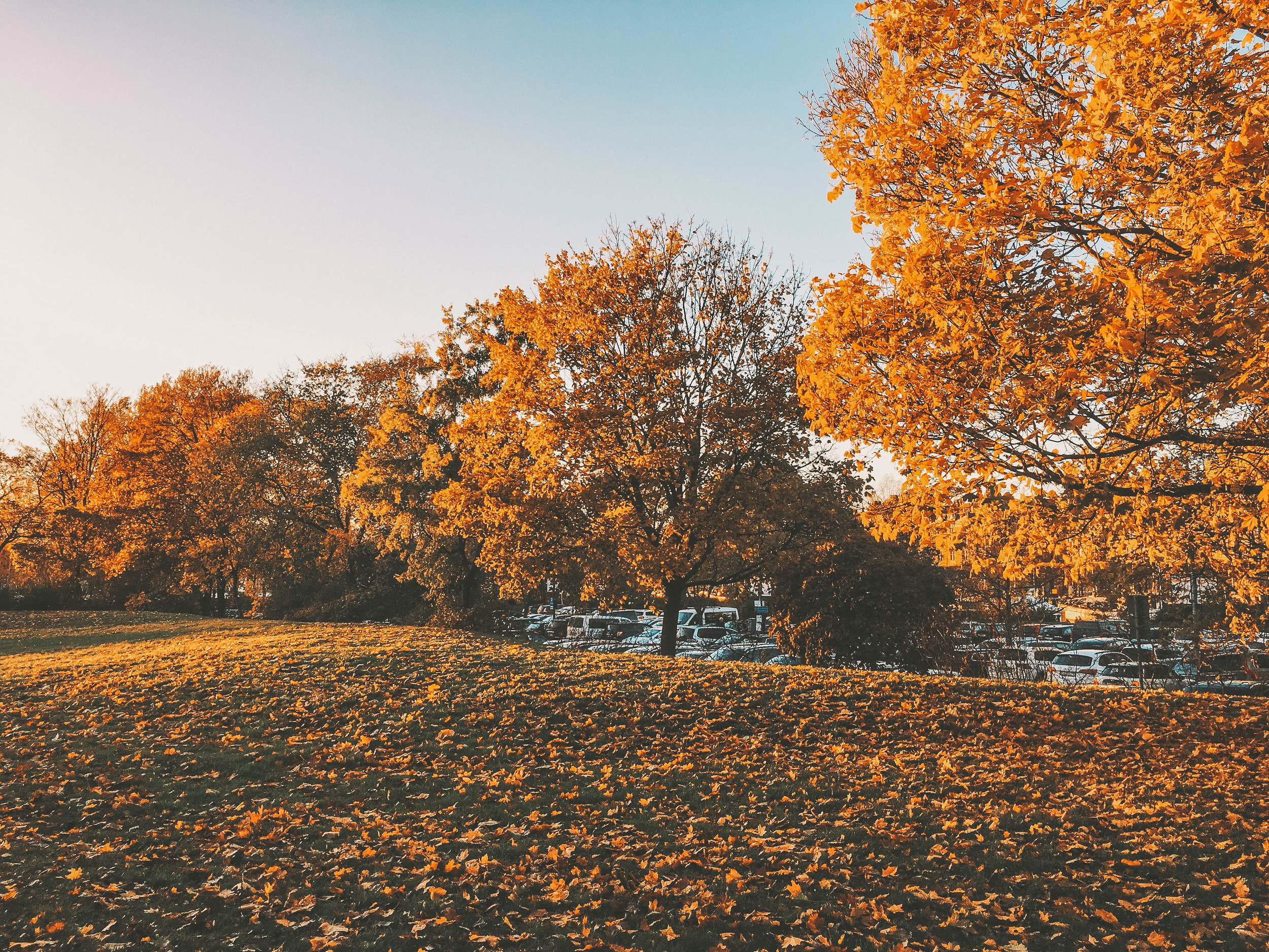 Photo Diary: Autumn in Stockholm, Sweden 5