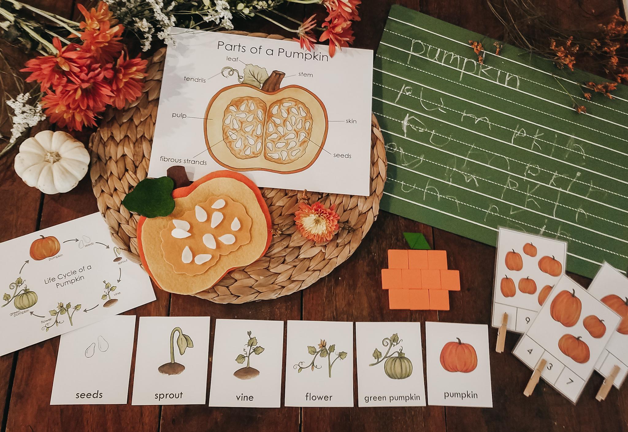 pumpkin label the plant part diagram [ 1500 x 1033 Pixel ]