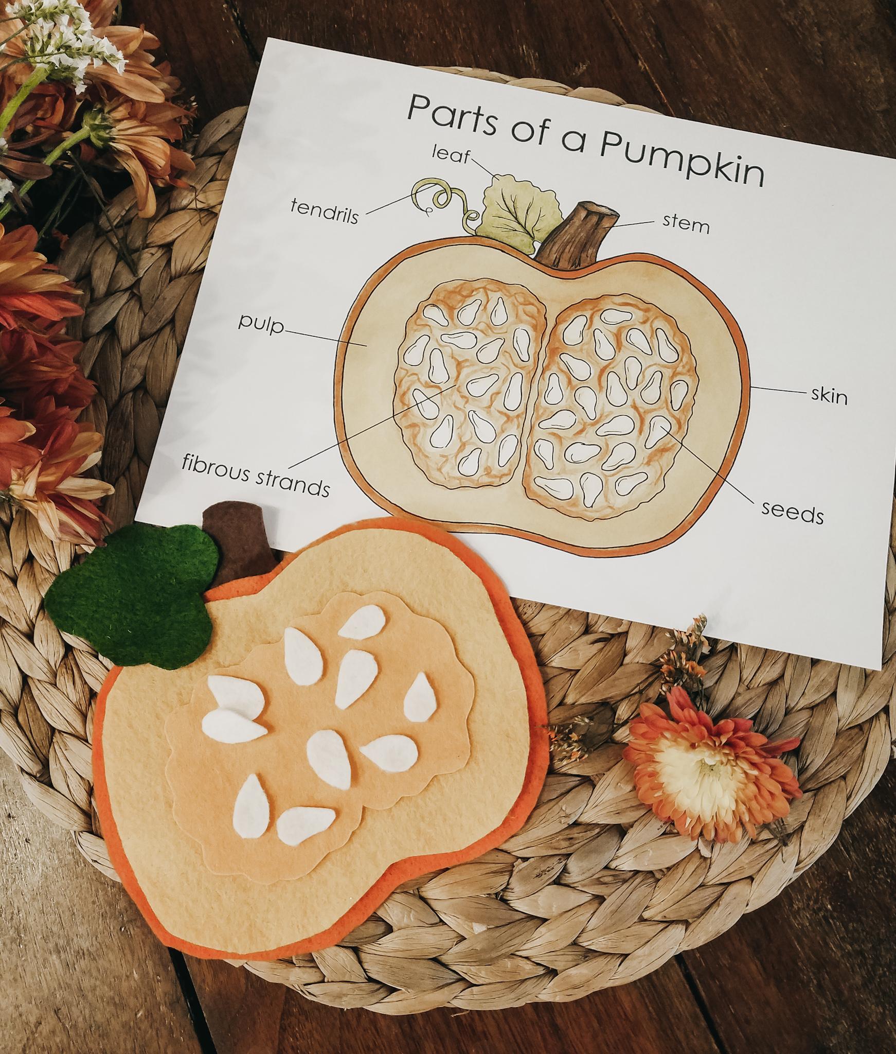 hight resolution of pumpkin invitation
