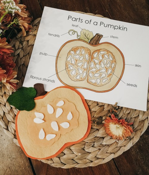 small resolution of pumpkin invitation