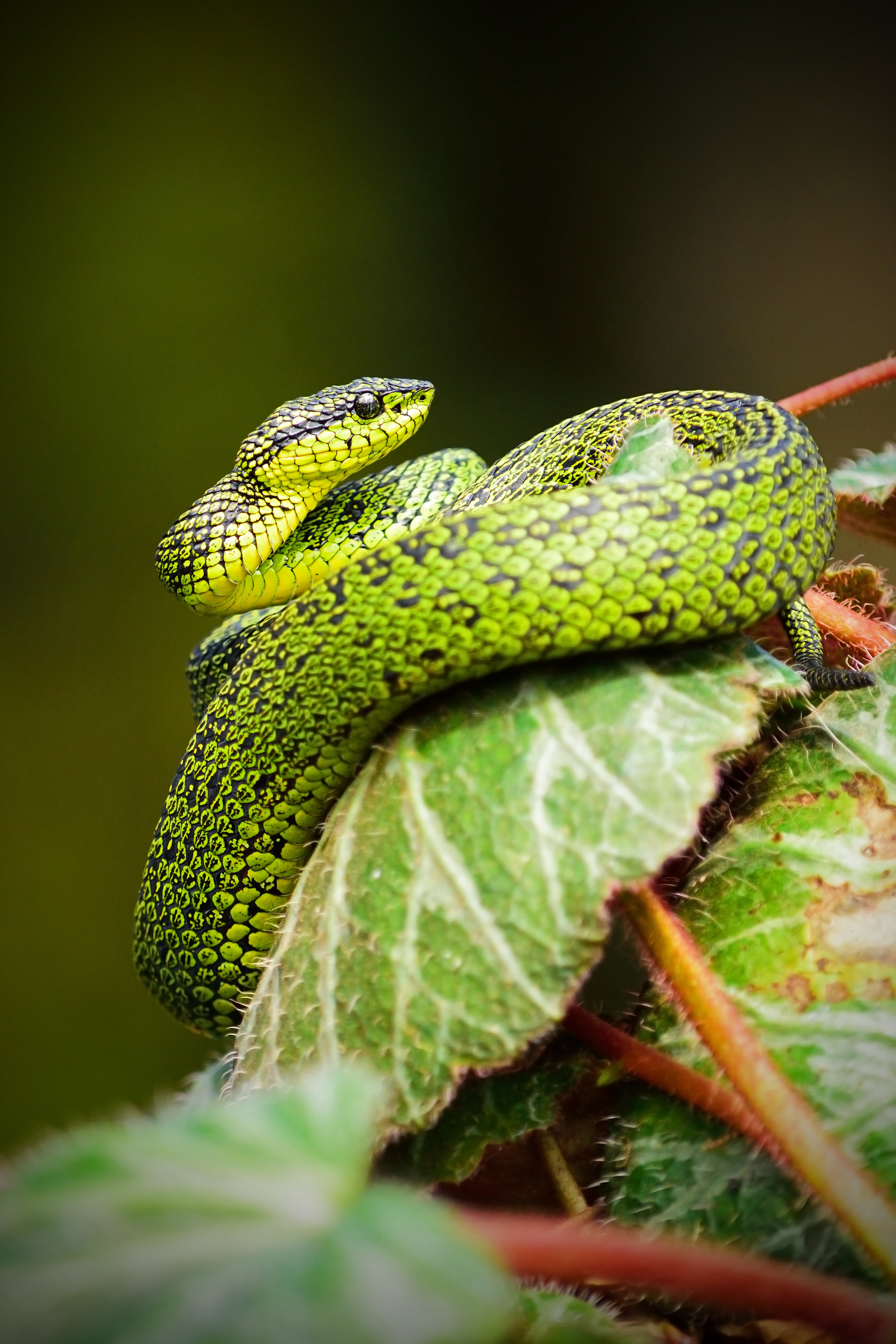 Researchers trace Coronavirus outbreak in China to snakes | Vet Candy