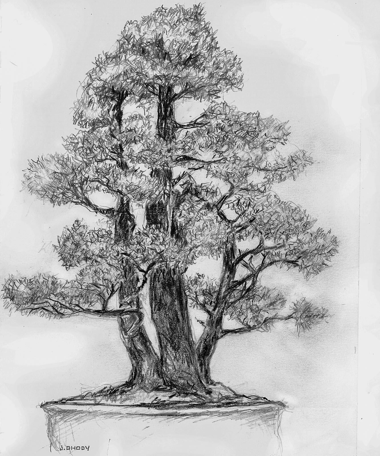 Bonsai Drawing : bonsai, drawing, Bonsai, Drawings, Pennsylvania, Society