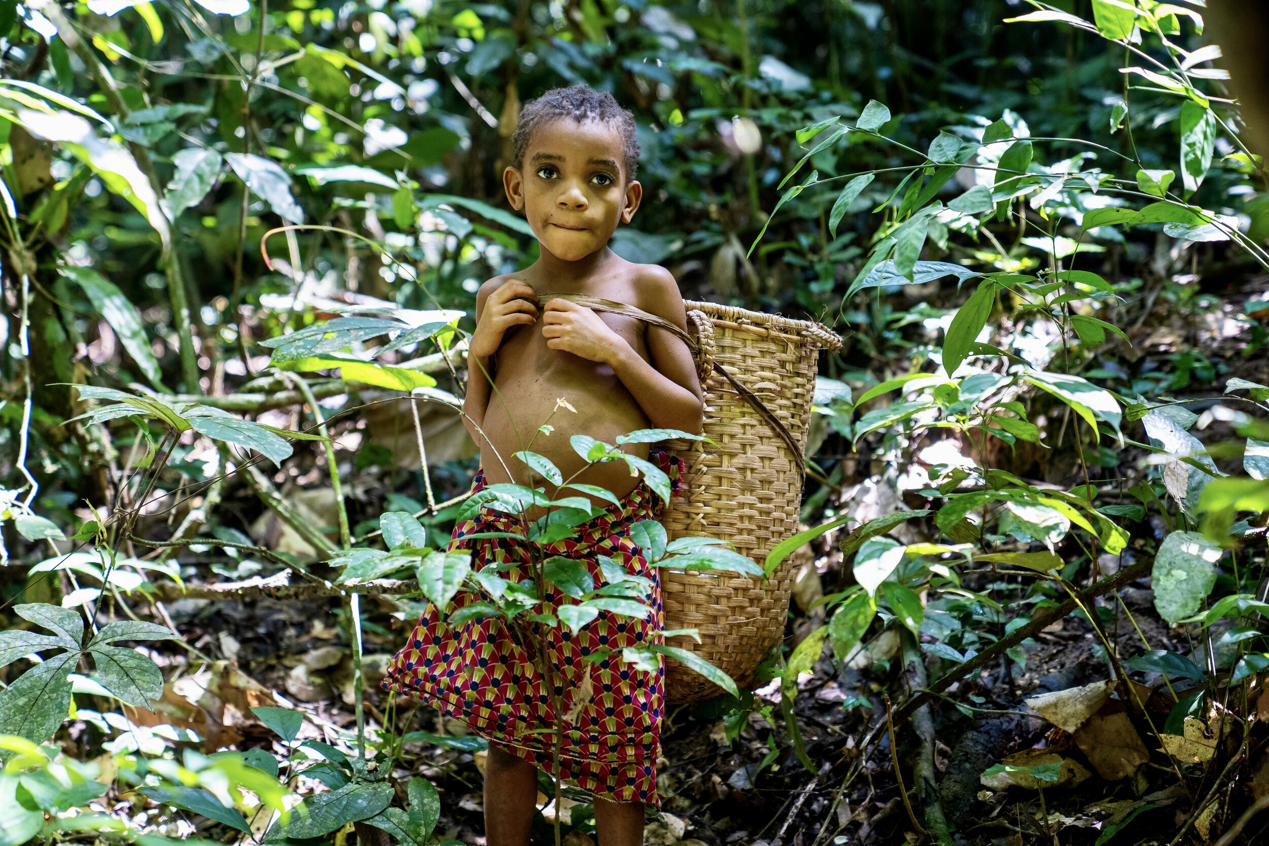The congolese forests are a global 200 ecoregion. Mbuti The People Of Congo S Ituri Rainforest Matt Reichel