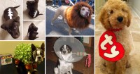 15 Hilarious Dog Costume Ideas You Have To See