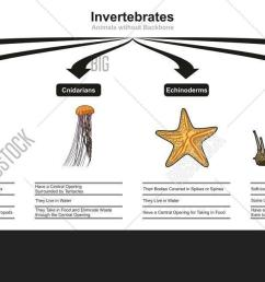 invertebrates animals classification and characteristics infographic diagram showing all types including worm arthropod cnidarian echinoderm mollusk [ 1500 x 652 Pixel ]