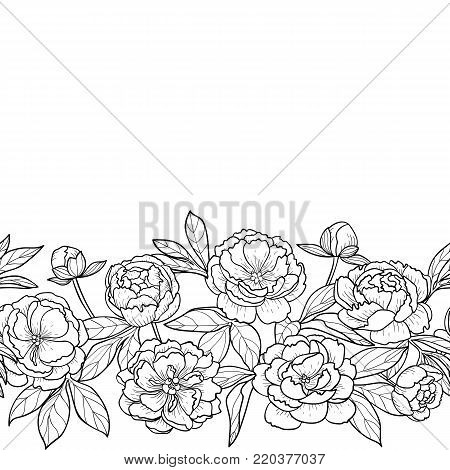Peony Flowers Leaves Vector Photo Free Trial Bigstock