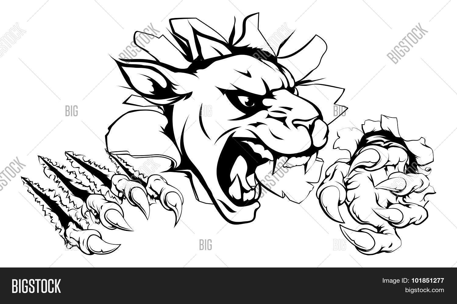 Panther Claw Vector Amp Photo Free Trial