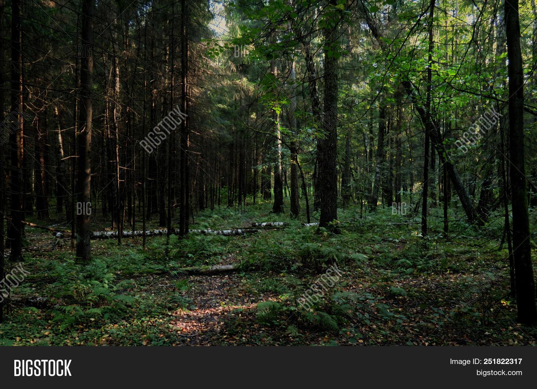 Facebook, google+, twitter, blogger, wordpress, pinterest and more. Dense Forest Fallen Image Photo Free Trial Bigstock