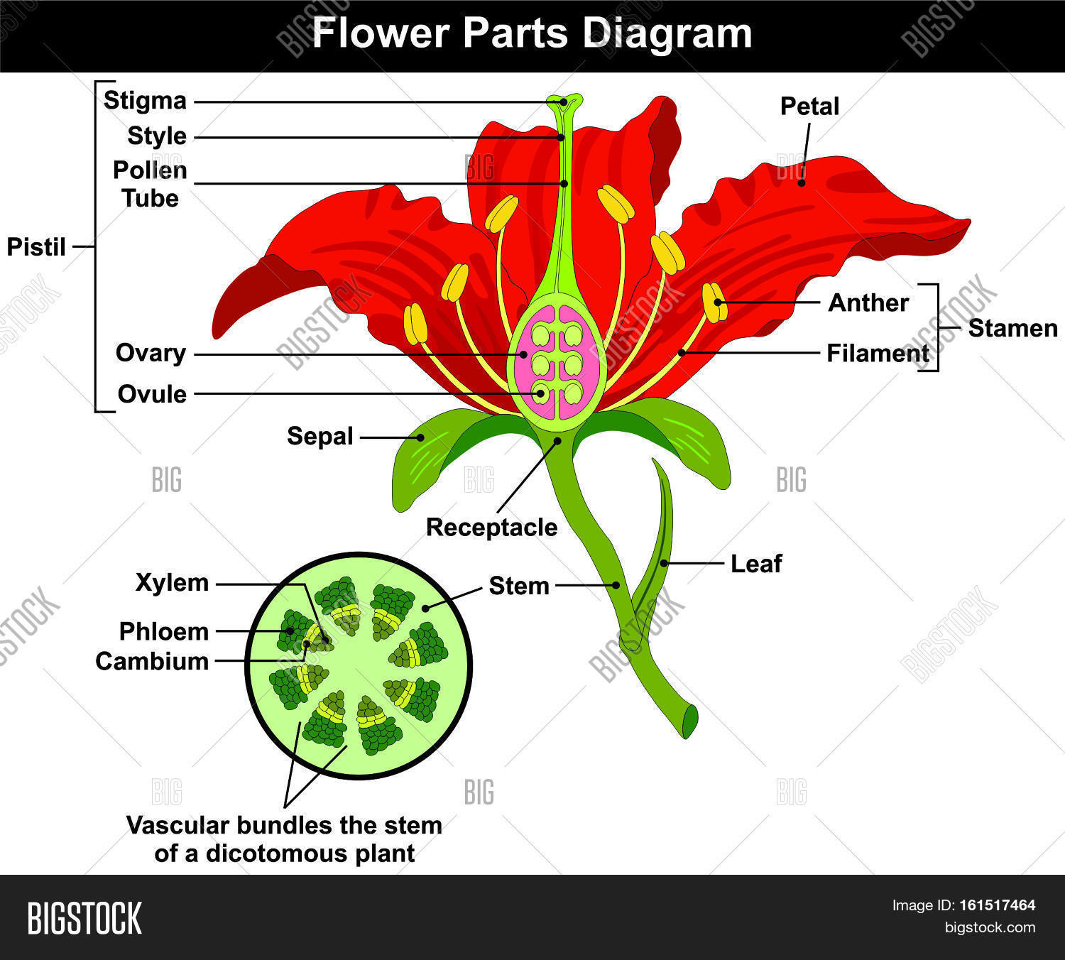 how to draw stem and leaf diagram 2000 gmc sierra stereo wiring flower parts cross image photo bigstock