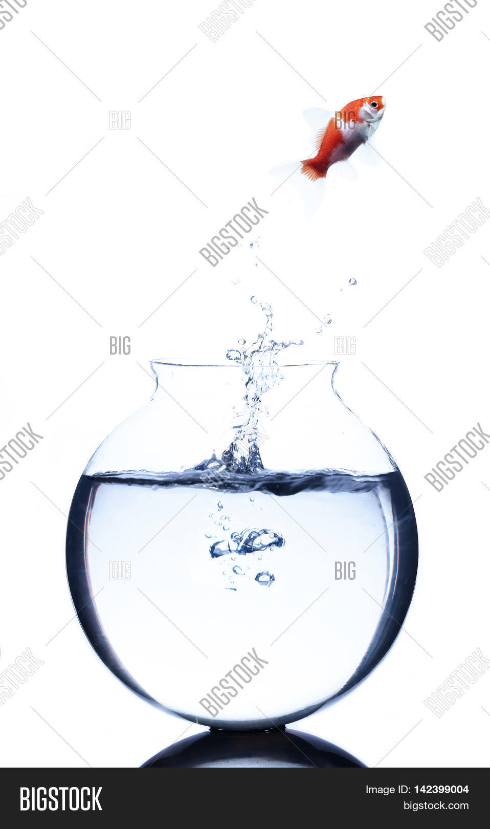 medium resolution of goldfish jumping from a bowl isolated on white background