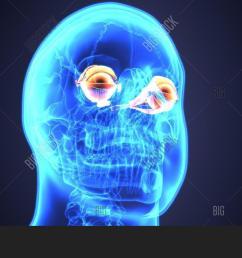 3d illustration of human eye anatomy diagram eyeball diagram [ 1500 x 964 Pixel ]
