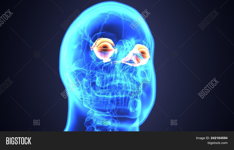 hight resolution of 3d illustration of human eye anatomy diagram eyeball diagram
