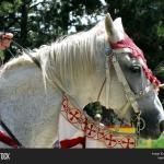 White Horse Head Image Photo Free Trial Bigstock