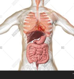 human body anatomy respiratory and digestive system 3d illustration [ 1500 x 1120 Pixel ]