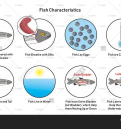 fish characteristics infographic diagram including slippery scales gills laying eggs cold blooded fins tail living in [ 1500 x 1091 Pixel ]