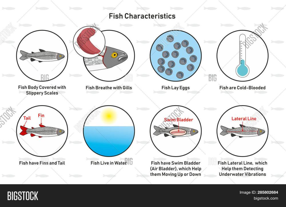 medium resolution of fish characteristics infographic diagram including slippery scales gills laying eggs cold blooded fins tail living in