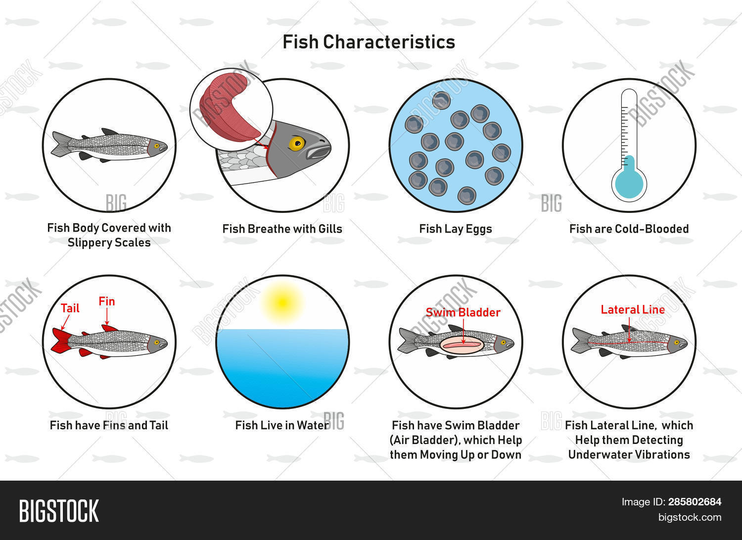 hight resolution of fish characteristics infographic diagram including slippery scales gills laying eggs cold blooded fins tail living in