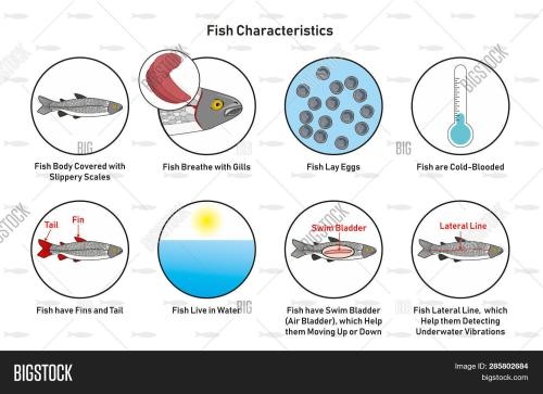 small resolution of fish characteristics infographic diagram including slippery scales gills laying eggs cold blooded fins tail living in