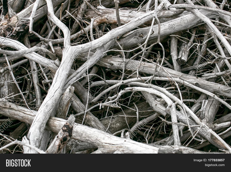 Fruit Tree Wood