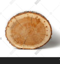 cross section of tree trunk isolated on white background [ 1500 x 1121 Pixel ]