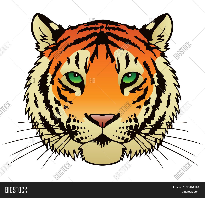 tiger face vector photo