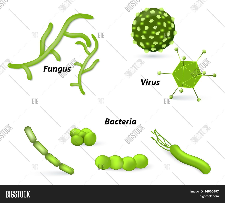 Virus Bacteria Fungi Vector Amp Photo Free Trial