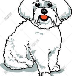 maltese dog [ 1176 x 1620 Pixel ]