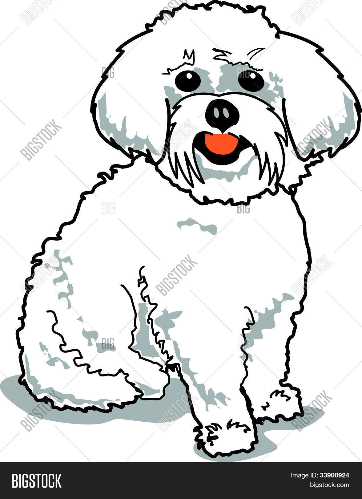 hight resolution of maltese dog